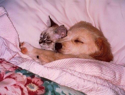 Kitty & Puppy friends