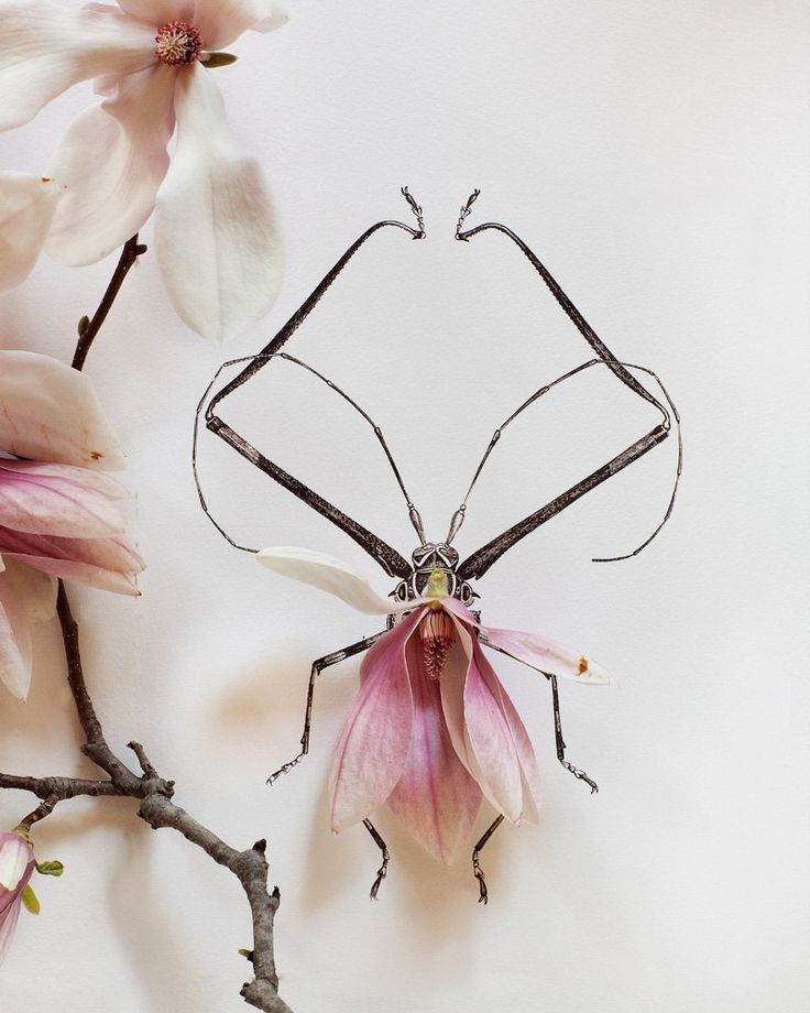 "Drawings of insects with flowery wings - ""Magnolia bug no. 4336"", by Kari Herer"
