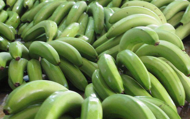 Theo các nghiên cứu trước đó, chuối xanh rất giàu protein, tinh bột, các loại vitamin và khoáng chất. Đặc biệt chuối có hàm lượng kali cao.