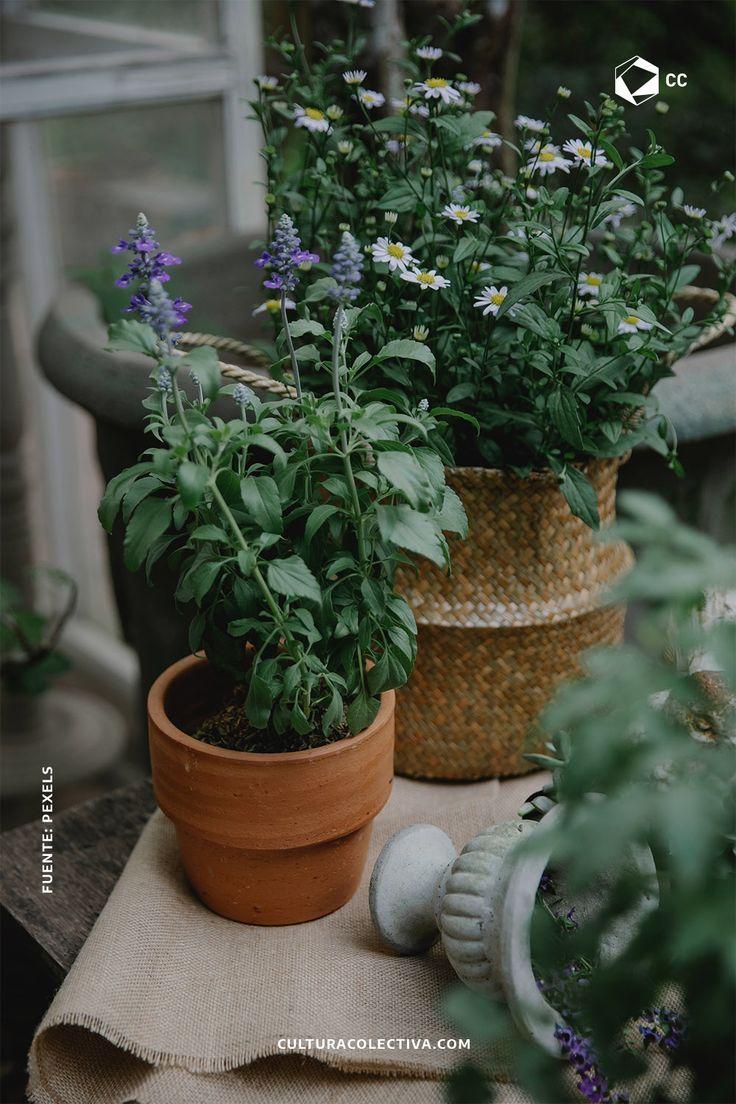 La decoración de nuestro jardín es indispensable porque en él podemos pasar los momentos más divertidos y relajantes en nuestro hogar. The Next Big Thing, Dream Garden, Planter Pots, World, Gardening, Mini, Gardens, Home, Naturaleza