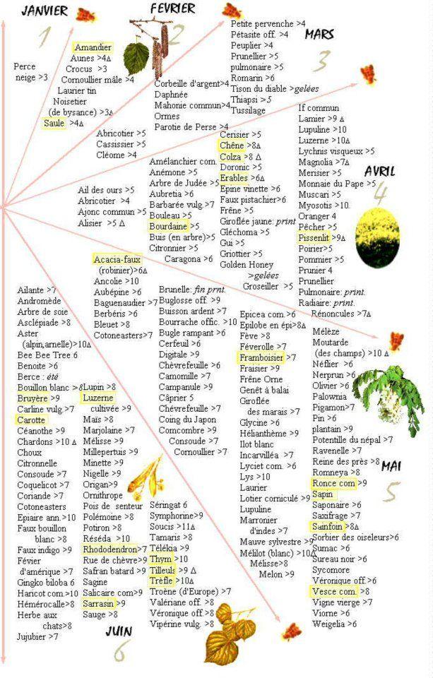 plantes melliferes par saison