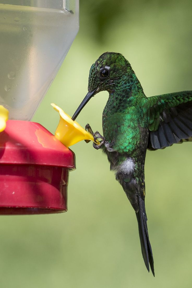 15 Fascinating Facts About Hummingbirds and How to Attract