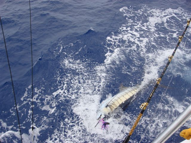 31 best dream weekend getaway my paradise images on for Fishing charters oahu