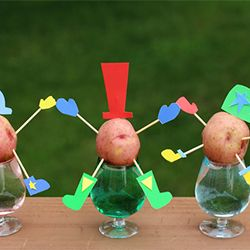 Part science, part craft this adorable activity is simple and loads of fun. Learn how to make potato sprout people in a few short steps!