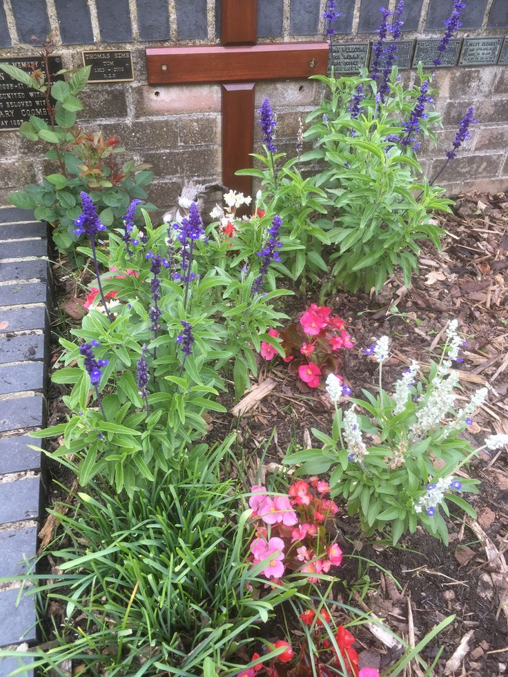 Church area- salvias, begonias and bark chippings