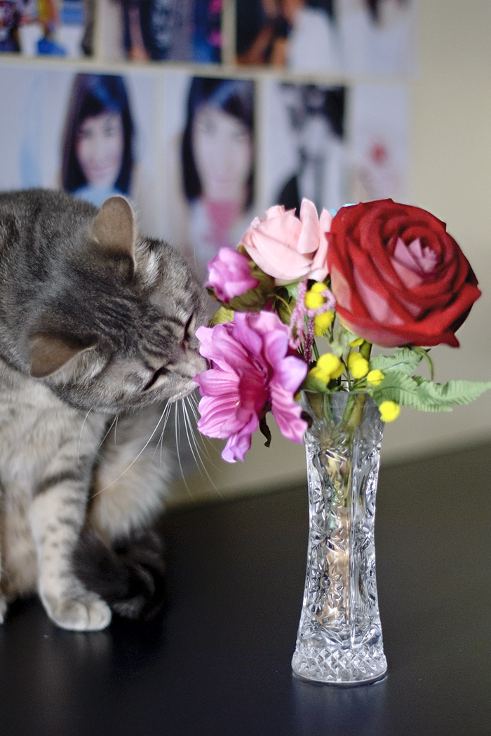 Sniff sniff! Oh how much I love smelling flowers!     #kikithesweetycat #pursesandi #cat #gatto #flowers #animals #catlovers #eyes #cute #nice #gatta #baby #colors #spring #colors www.pursesandi.net