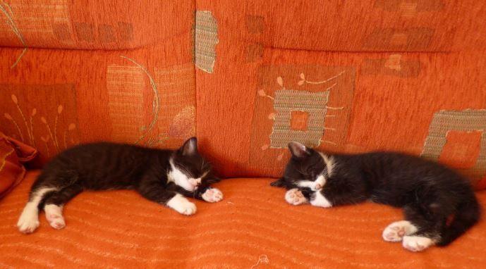Mäxchen und Michi