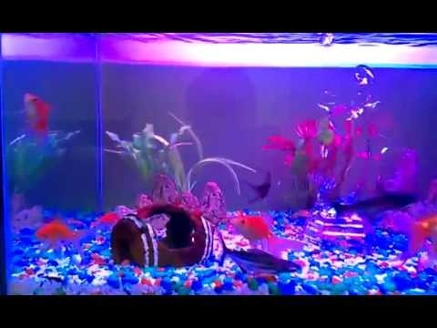 16 Best Images About Aquarium And Fish Tank Led Lighting