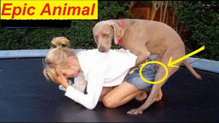 Hardest TRY TO STOP LAUGHING - Best FUNNY ANIMAL Video Compilation 2017 ...