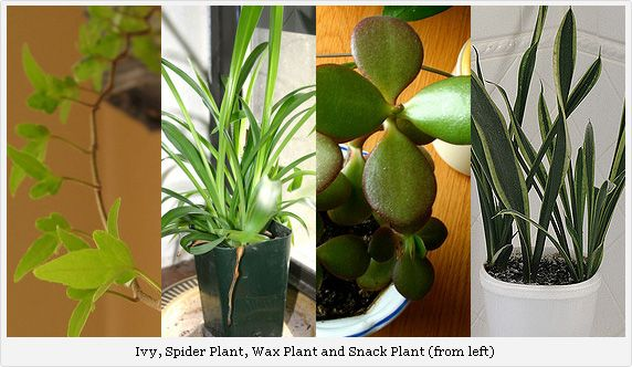 Pin by lauren chesney on home sweet home pinterest - House plants low maintenance ...