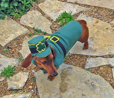 "My wild Irish Doxie! Outfit from etsy store ""Young Urban Pup""."