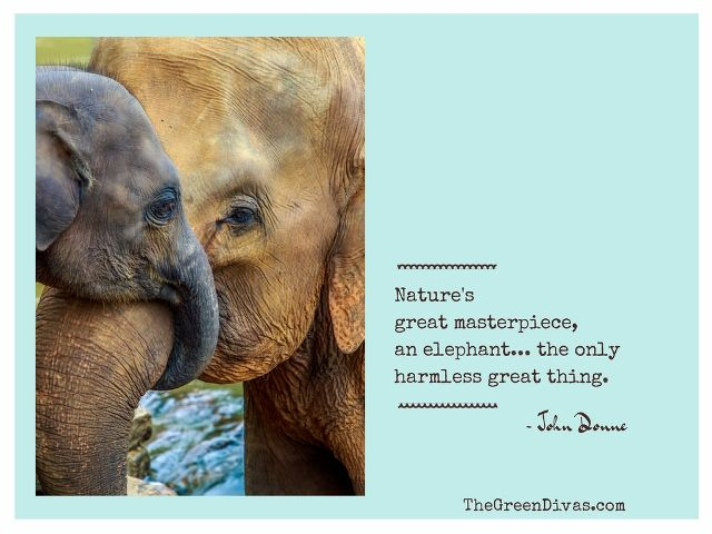 Image result for Baby Elephant Quotes
