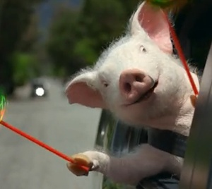 Geico Home Insurance >> 1000+ images about Maxwell the Geico Pig on Pinterest