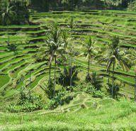 Taman Nasional Bali Barat (West Bali National Park)