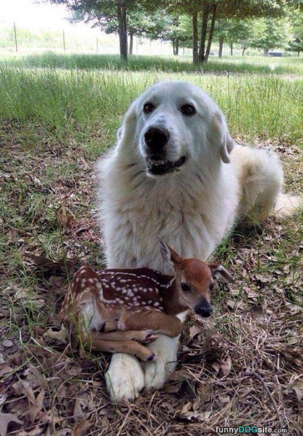 Cute Little Friends - funnydogsite.com