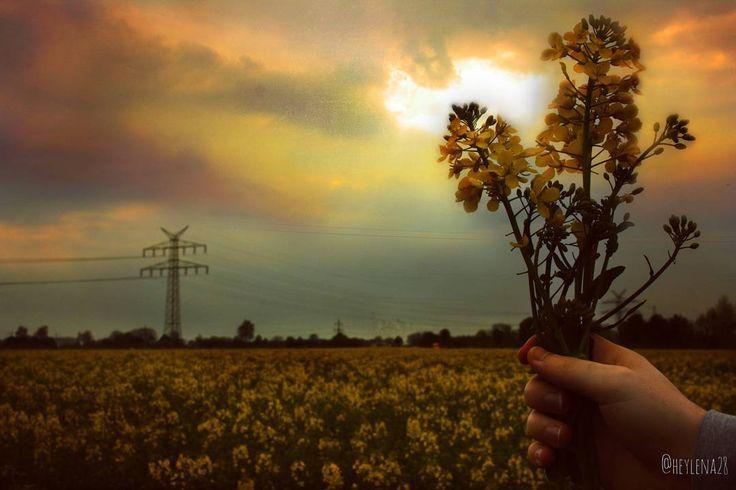 All yellow���� #frühling #spring #sky #himmel #field #feld #yellow #gelb #rapsfeld #countryside #landscape #landschaft #photography #photographie #canon #beautiful #nice #sunset #yellowsky #nature #natur  #weather #wetter #plants #pflanzen #sun #sonne #sonnenuntergang http://tipsrazzi.com/ipost/1505276760815931246/?code=BTj0T0ZFY9u