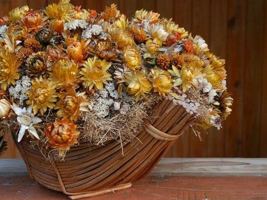 Сухоцветы №2