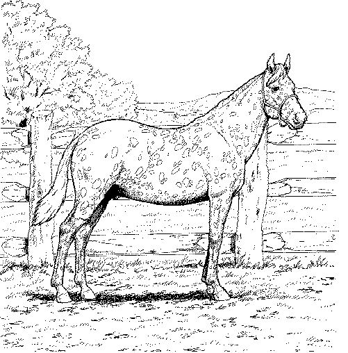chevale coloring pages - photo#36