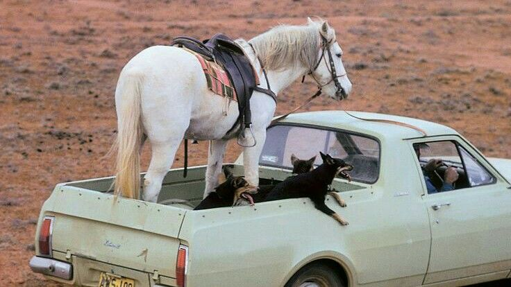 Jip - Africa - SAFETY of animals ALWAYS first priority!  Yeah right!
