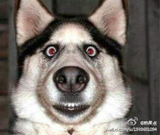 cachorro assutado foto