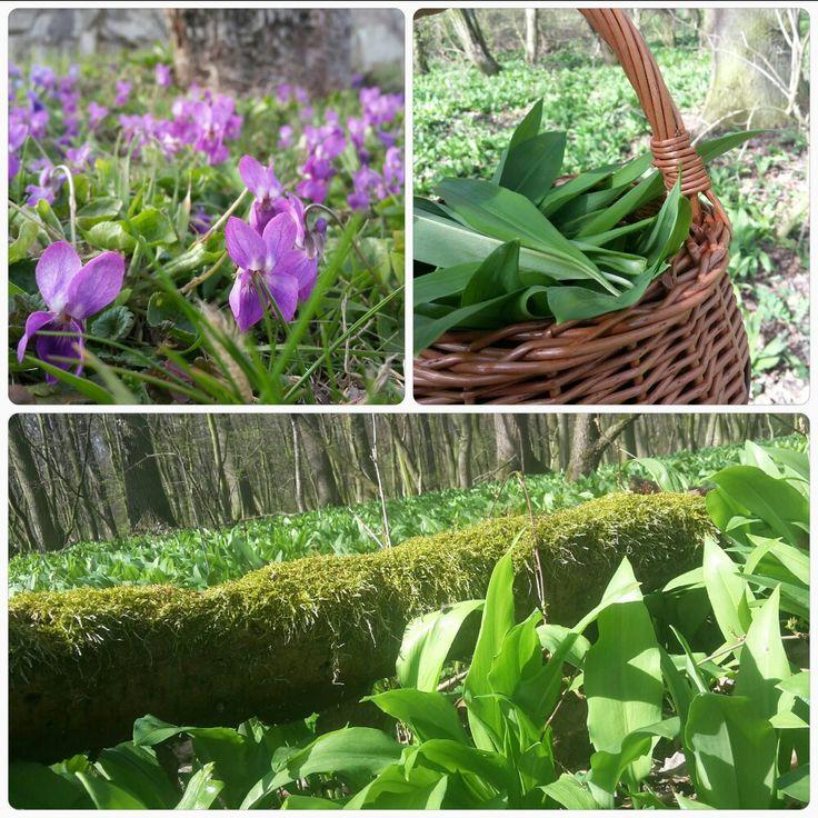 Alium ursinum, Violets, Spring
