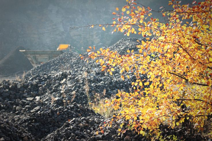 autumn tree in a quarry
