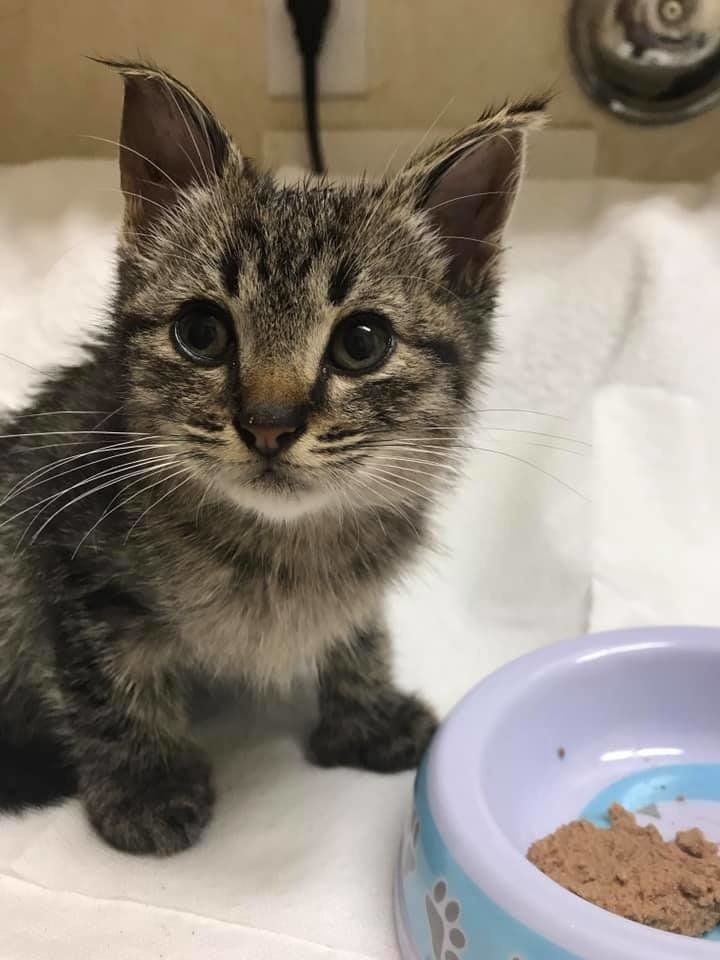 Woman Saves Kitten Found On The Road And Discovers His Cat Family That Needs Help With Images Cat Family Cats Animal Shelters Near Me