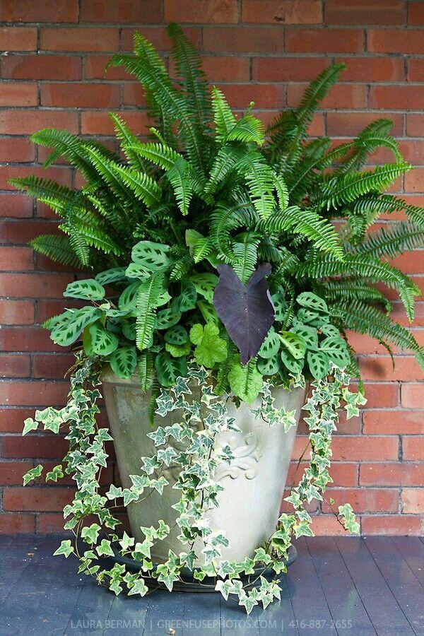 10 besten blumen pflanzen im k bel oder schale bilder auf pinterest gardening g rten und eingang. Black Bedroom Furniture Sets. Home Design Ideas
