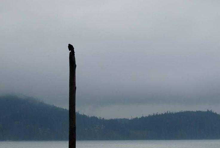~Shannon Brockhurst 2014, port Renfrew BC Canada, ocean beach. Lone bird, pole