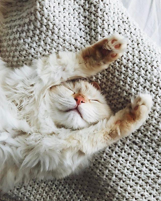 с добрым утром картинки с котом и гнездом на голове однажды время карманной