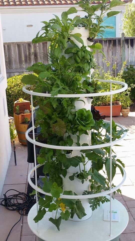Diffe Plants Tower Garden Aeroponic System Juice Plus Grow Your Own