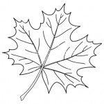 leaf maplestencil
