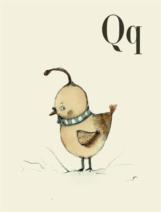Q for Quail  Alphabet animal,  Print 6x4 inches
