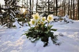 Mától, 5 teljes napon át árad a kegyelem az Istenházból November 1.-én hajnalig.   Kérlek benneteket, kérjetek kegyelmet mindazon dolgokra melyeket eddig nem tudtatok, tudtunk megoldani itt a Földön.   Az Isteni kegyelem ilyenkor komoly segítséget küld és terel a megoldások felé. Lehet, hogy megéleti azon...