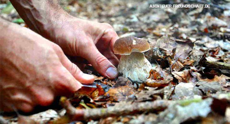 11 essentielle Basics fürs Pilze sammeln, die du wissen musst