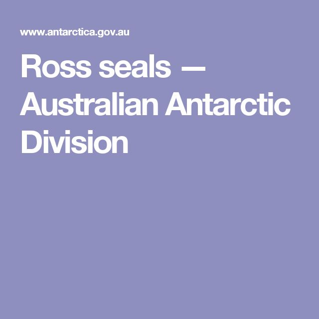 Ross seals — Australian Antarctic Division