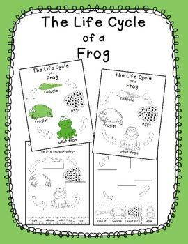 This freebie includes two frog life cycle cut and paste activities and two posters.  The two activities allow you to easily differentiate for your students. Choose from two posters, one color and one grayscale, you can post in the classroom or use as reference or key for the cut and paste activities.This freebie is also available in Spanish here or in my TPT Store.