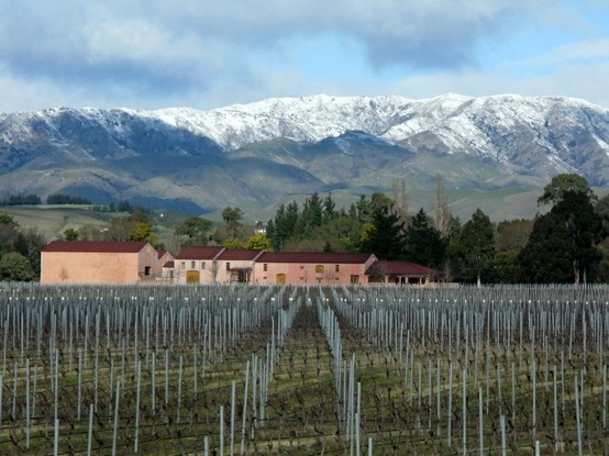 Isabel Vineyard in Winter