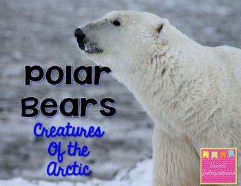 Polar Bears, Arctic Animals: Informational Text and PowerPoint Game $  Welcome to Sweet Integrations.  This is my third Creature Informational Text Unit. This unit is great for differentiation in your classroom. It covers several grade levels. Just pick and choose or adapt these activities. - Word Wall Words - Polar Bear Fact Sheet - Polar Bear Math – addition and subtraction - Label the polar bear - Polar Bear graphic organizer - Polar Bear mini research template - Protecting the Polar Bear…