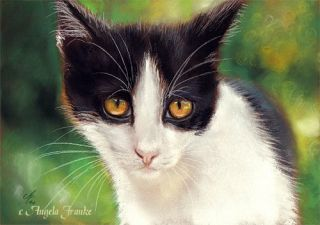 painting Tuxedo cat Pastell Katze Portrait kitten chat Zeichnung