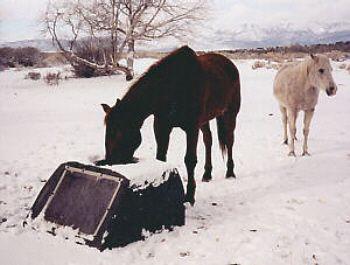 Suntanks,Freeze-free Solar heated Horse Waterers,Cow water tanks