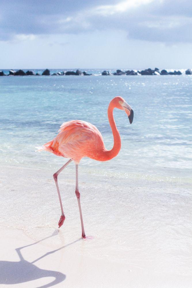 Pink flamingo on the beach