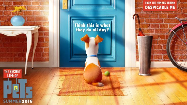 """Being Home Alone As Told By """"The Secret Life of Pets"""""""