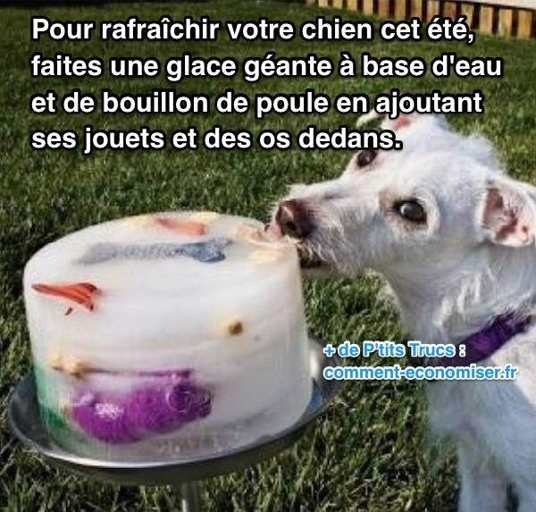 Voici un truc tout simple pour rafraîchir votre chien rapidement. L'astuce est de lui préparer une glace géante, faite d'eau et de bouillon de poule, en mettant ses jouets à l'intérieur. Découvrez l'astuce ici : http://www.comment-economiser.fr/chien-qui-a-chaud-que-faire.html?utm_content=buffer54a13&utm_medium=social&utm_source=pinterest.com&utm_campaign=buffer