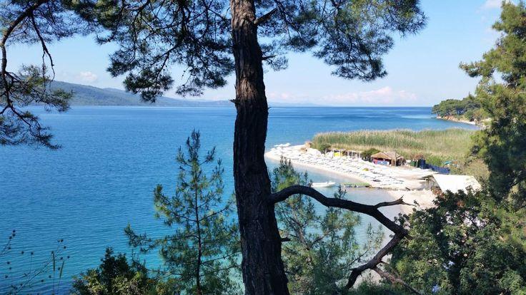 💡 Get this free picture Beach landscape    ▶ https://avopix.com/photo/52680-beach-landscape    #tree #landscape #oak #trees #true laurel #avopix #free #photos #public #domain