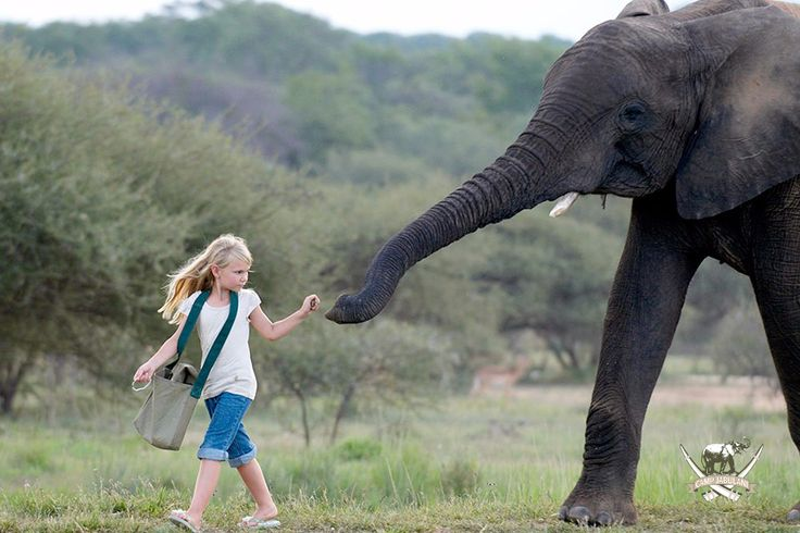 Relax & unwind, while the kids embark on an adventurous safari this summer. To find out more about the Team Tusker's itinerary, click here > http://campjabulani.com/families/ #CampJabulani #PerfectSummer #TeamTuskers #Kids #Elephant #Safari #SouthAfrica