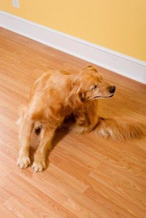 Best Tick Treatment For Dogs