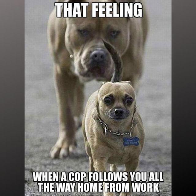Lol Just Act Cool Doglover Ilovemydog Dogfunny