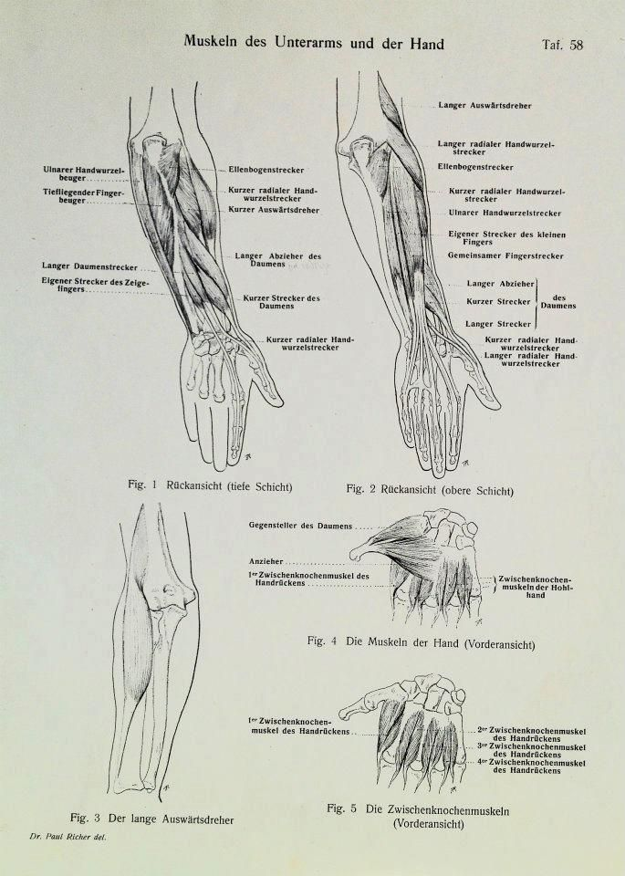 The 200+ best Anatomy images on Pinterest   Figure drawing, Figure ...