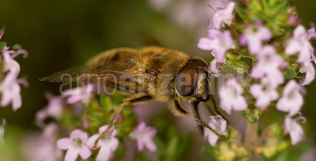 Bzzz...  © Arno Enzerink / www.stockphotography.nu All rights reserved.